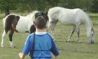 A la rencontre du troupeau